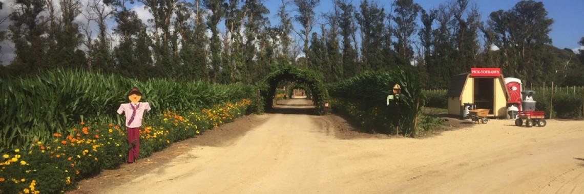 Ventura Farm 1